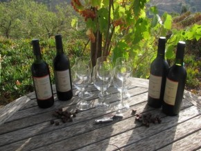 Nederlandse wijnboeren in Andalusië.
